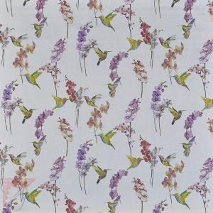 AP_HUMMING-BIRD-BLOSSOM